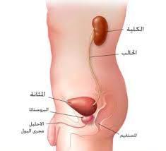 يشبه الحرب ميت في الداخل اعراض التهاب المثانة البولية عند النساء Dsvdedommel Com
